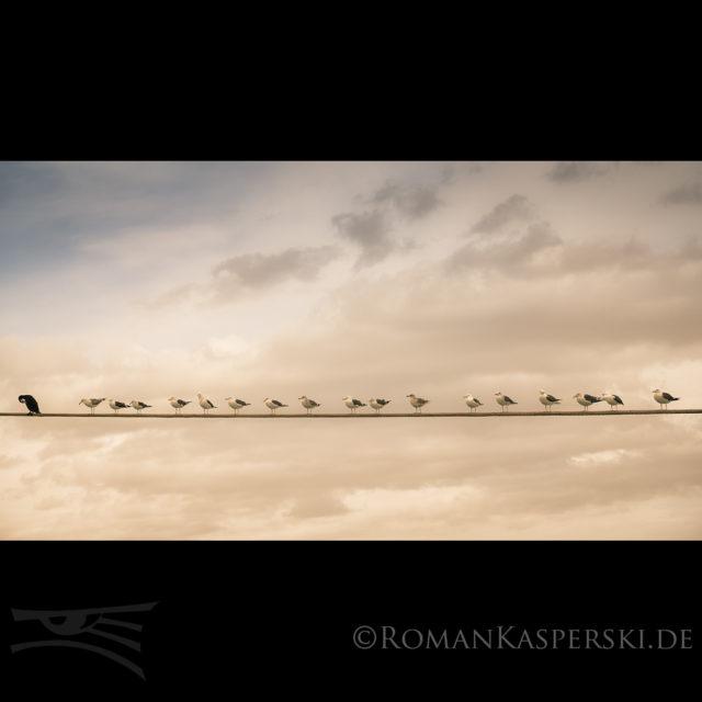 Vögel Möven Seil Reihe Himmel Hinten anstellen
