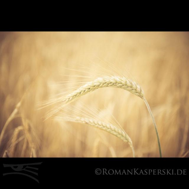 Feld Landwirtschaft